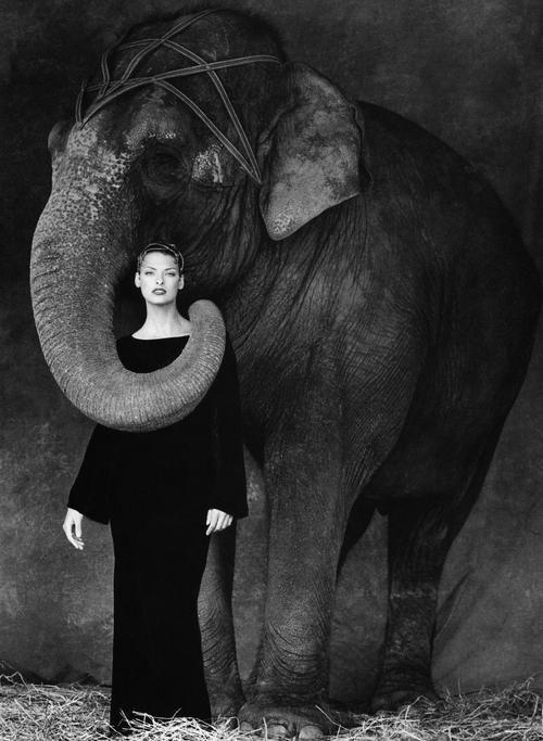 elephant-fashion-photography-90s.jpg