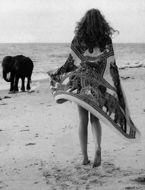 elephant-fashion-photography-beach.jpg