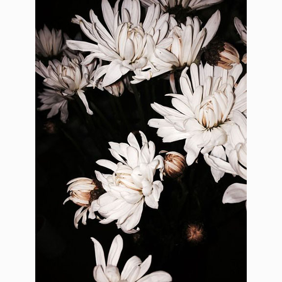 Unknown Photograph of Flowers at Night
