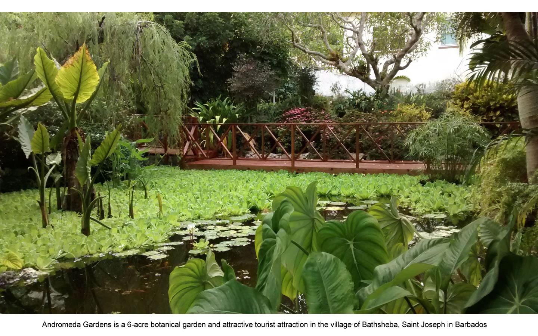 Adromeda Gardens.jpg