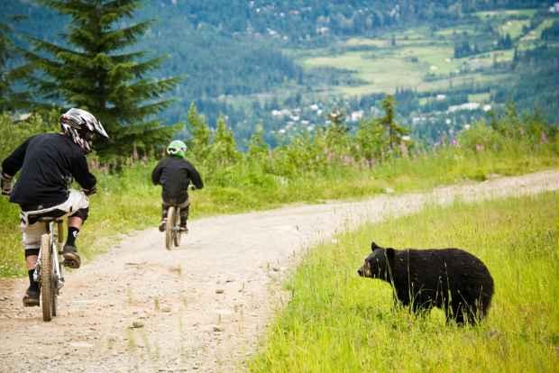 Bear Spotting in Whistler Bike Park