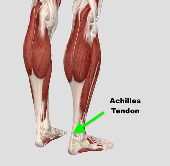 achilles-tendon.png