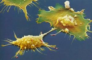 Macrophages.jpg