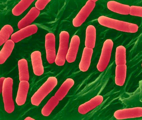 pathogen-e-coli.jpg