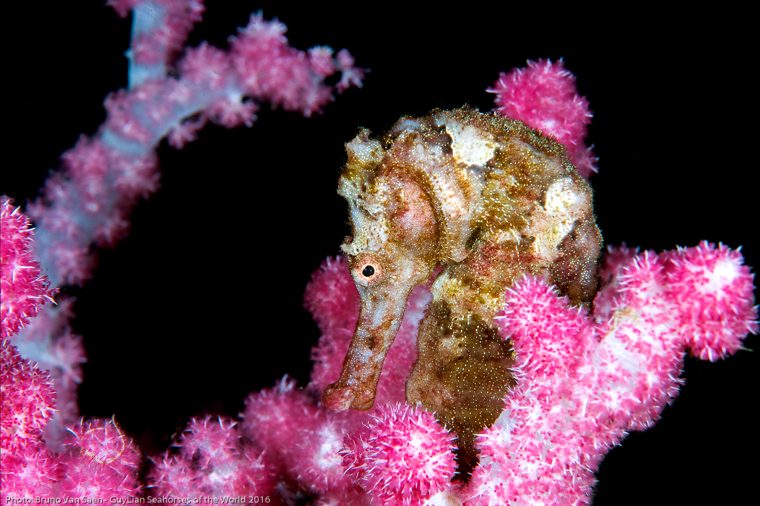 Toolkit: CITES for Seahorses - Country Resources -