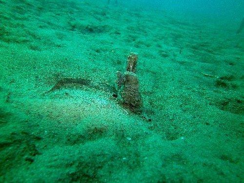 de9d9-stratoni_seahorses_6_miguelcorreia.jpg