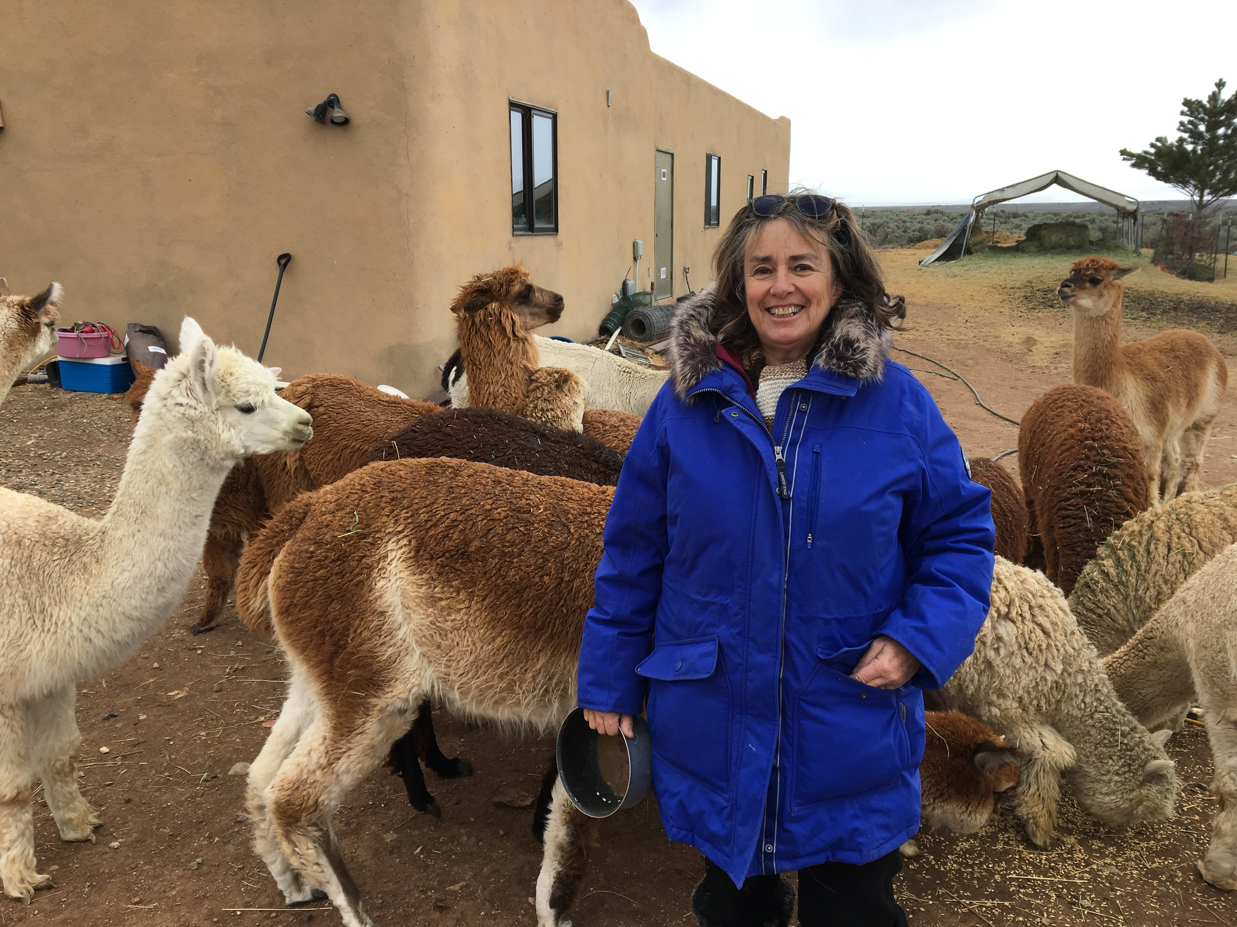 Frana wasn't always an alpaca farmer. She came to it later in her life and fell in love.