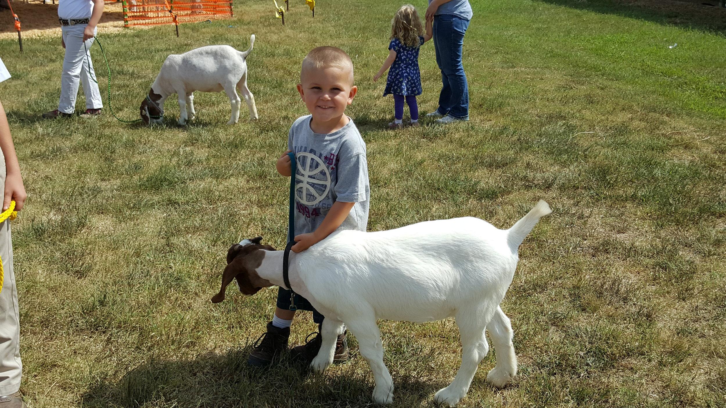 Goat & Sheep Showings