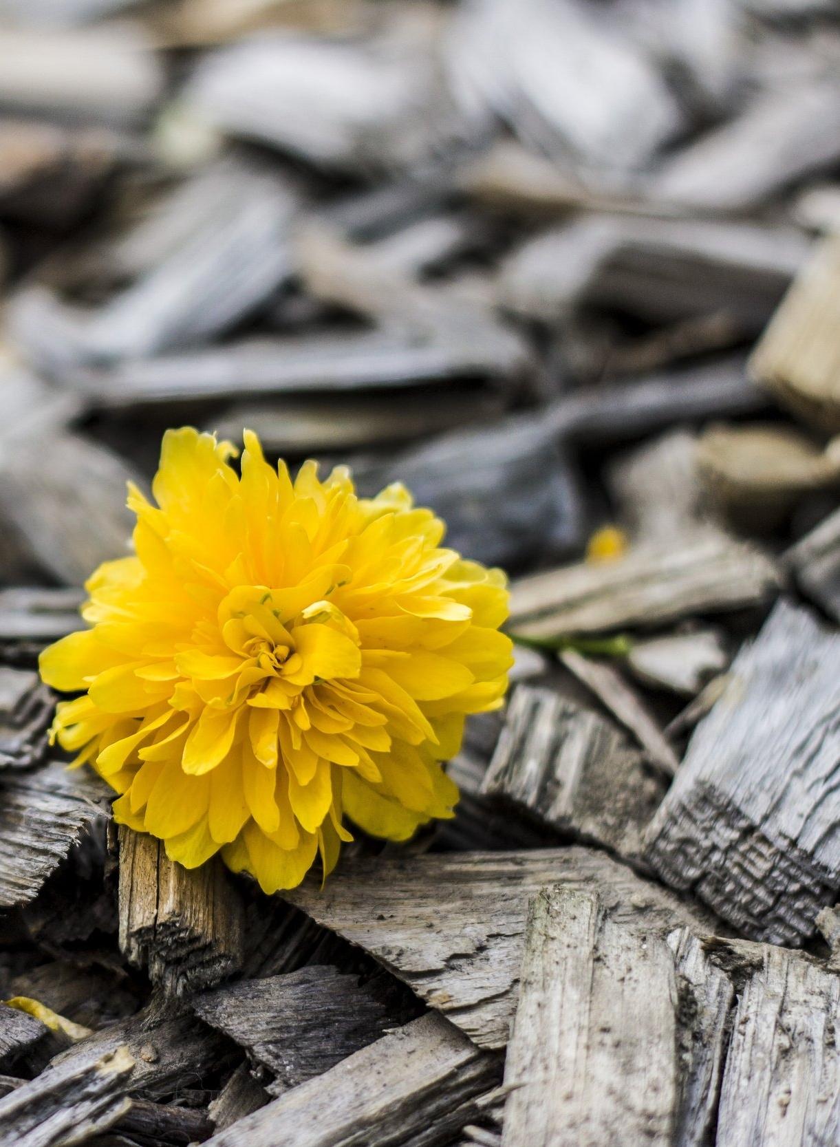 yellow-370256.jpg