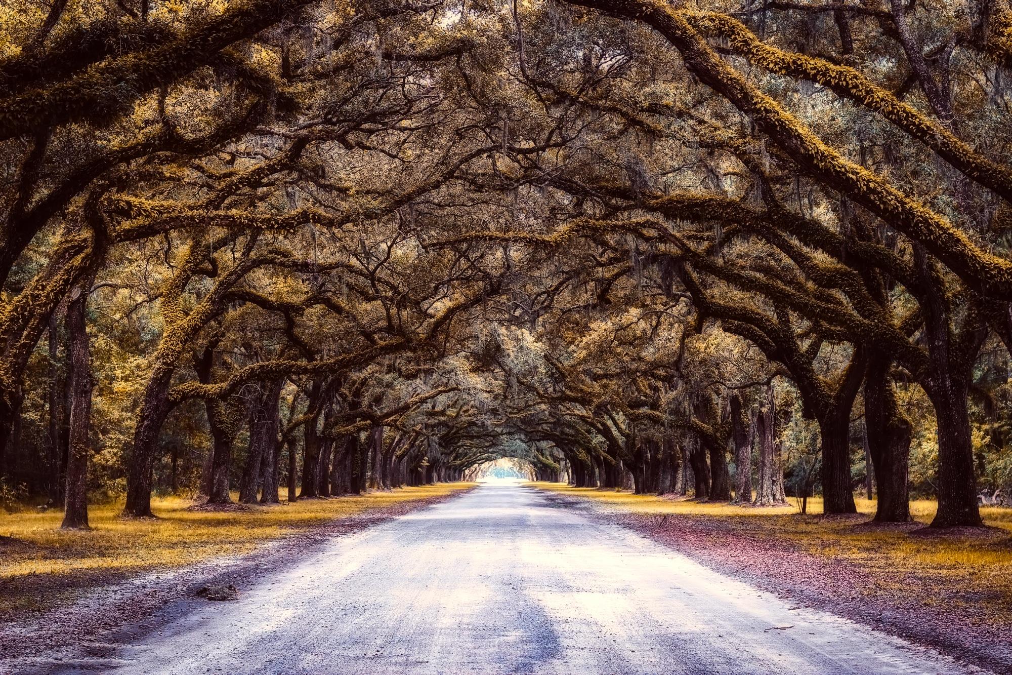 trees-2665947.jpg