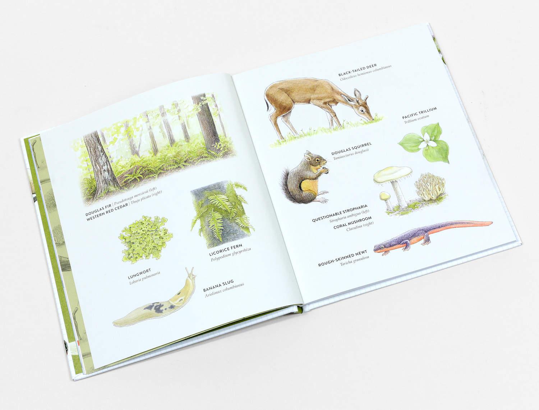 curious-kids-nature-guide-book-ADDITIONAL-590bd32e7a798-1500.jpg