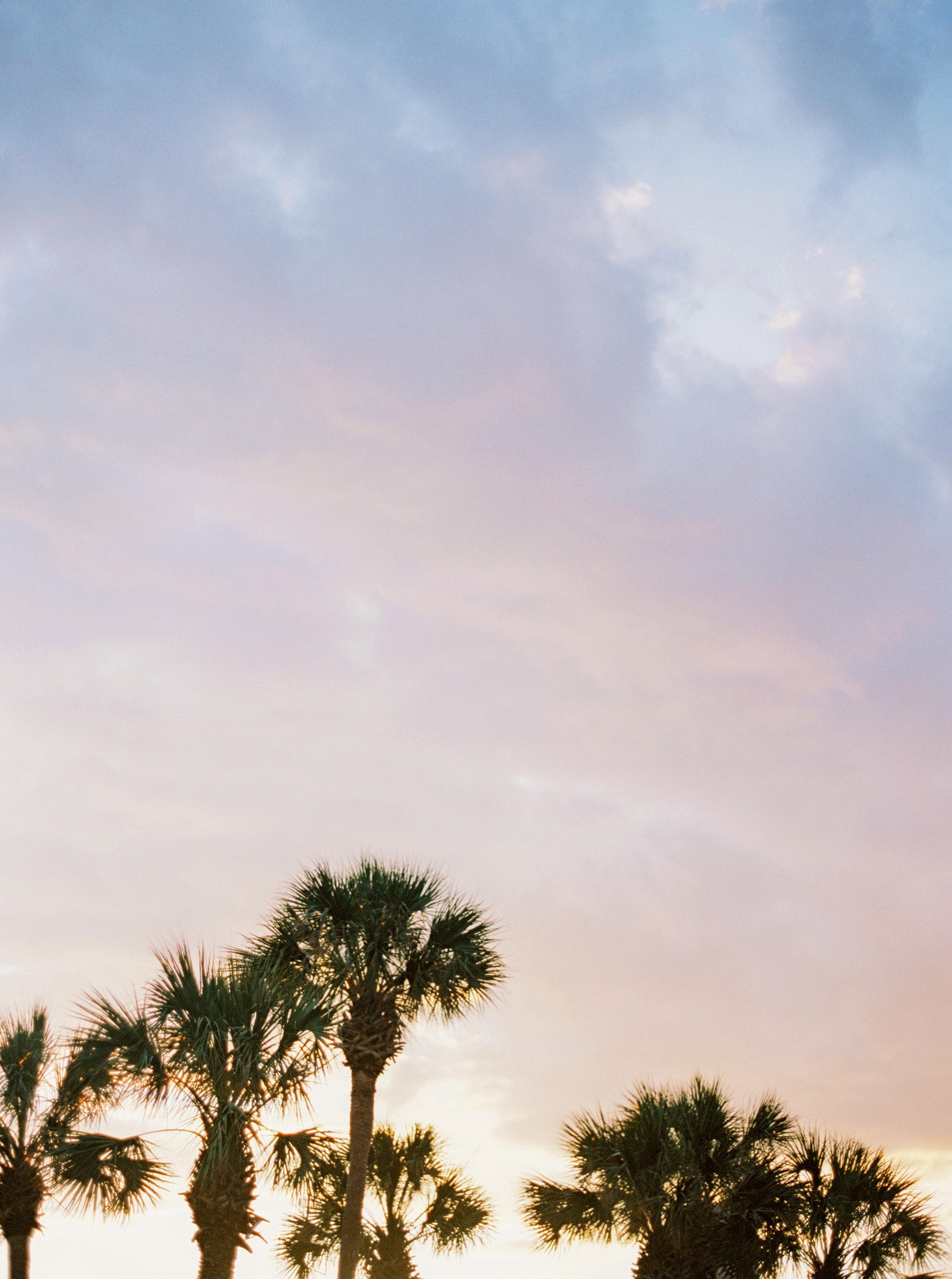 D. Palmy Sunset