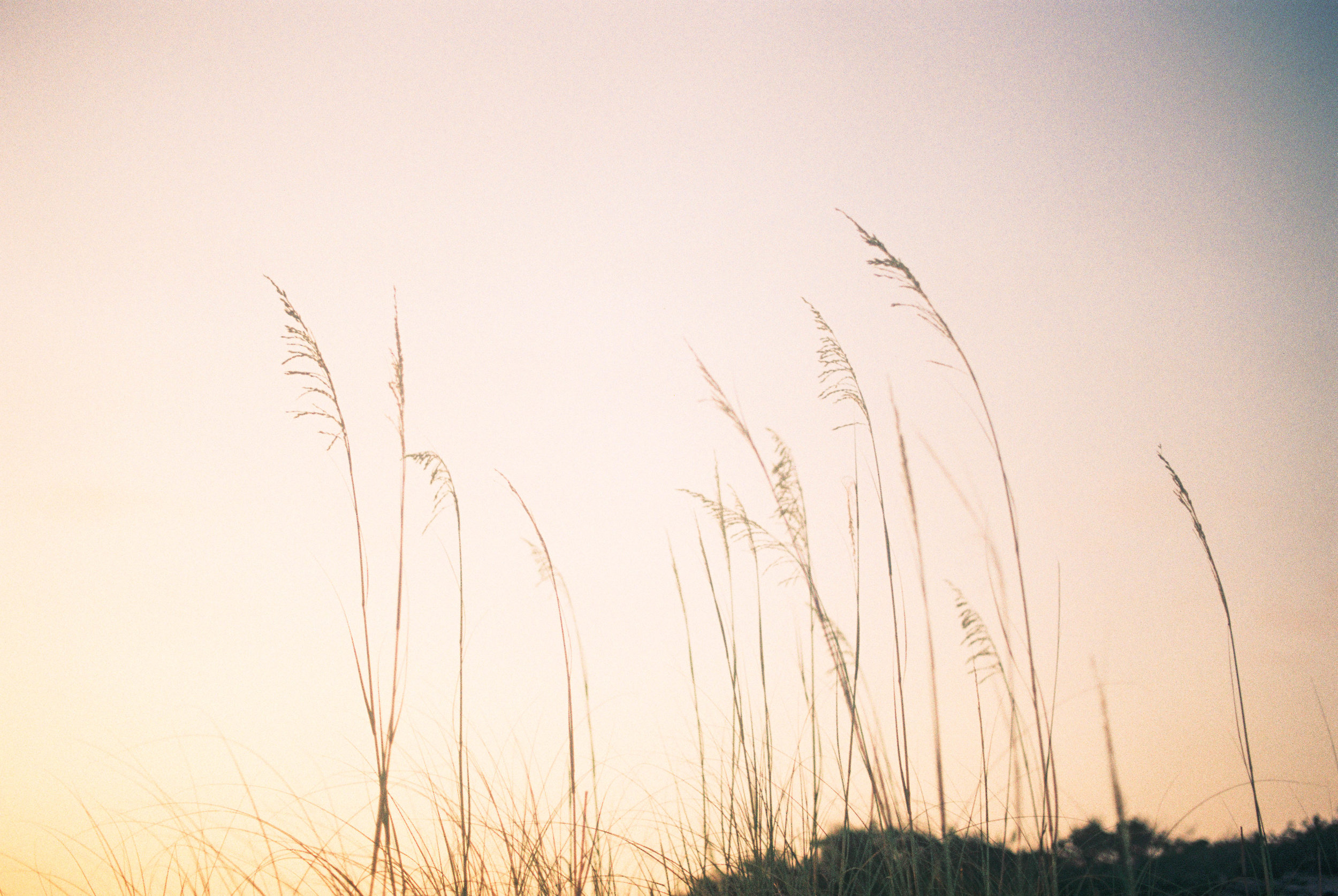 P. In the Wind