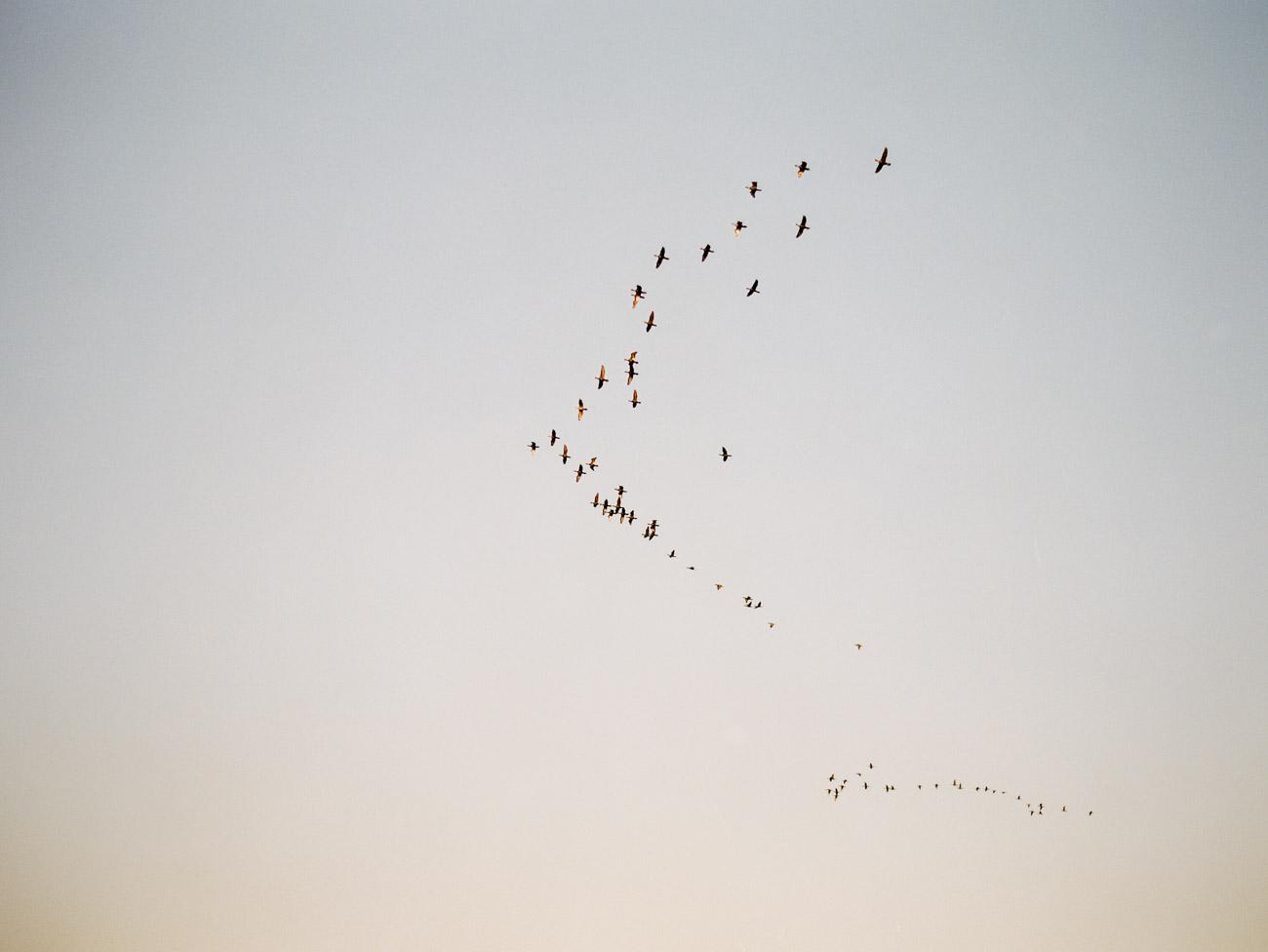 O. We Flock Together