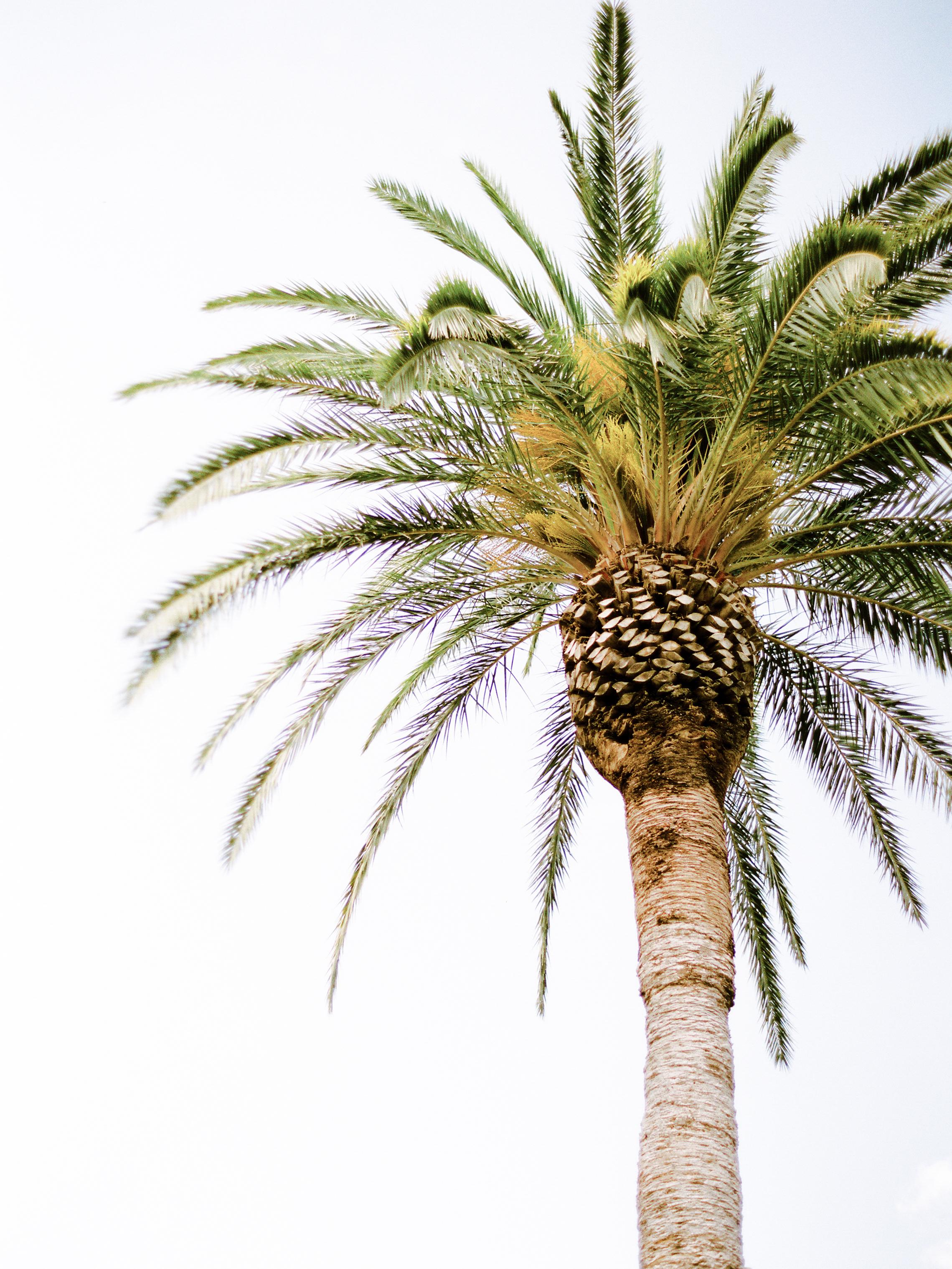 O. Palms