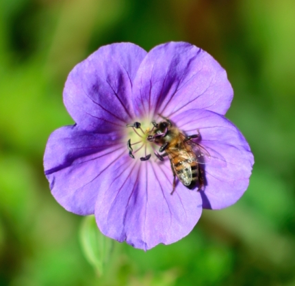 Melina Paez Getty flower 4.JPG