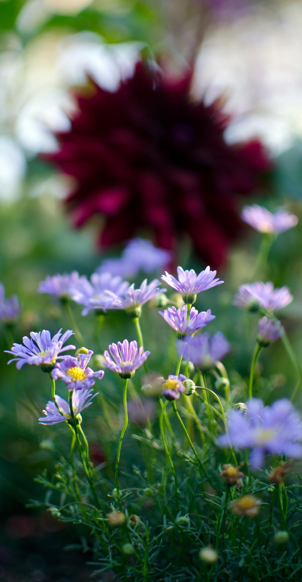 Melina Paez Getty flower 6.jpg