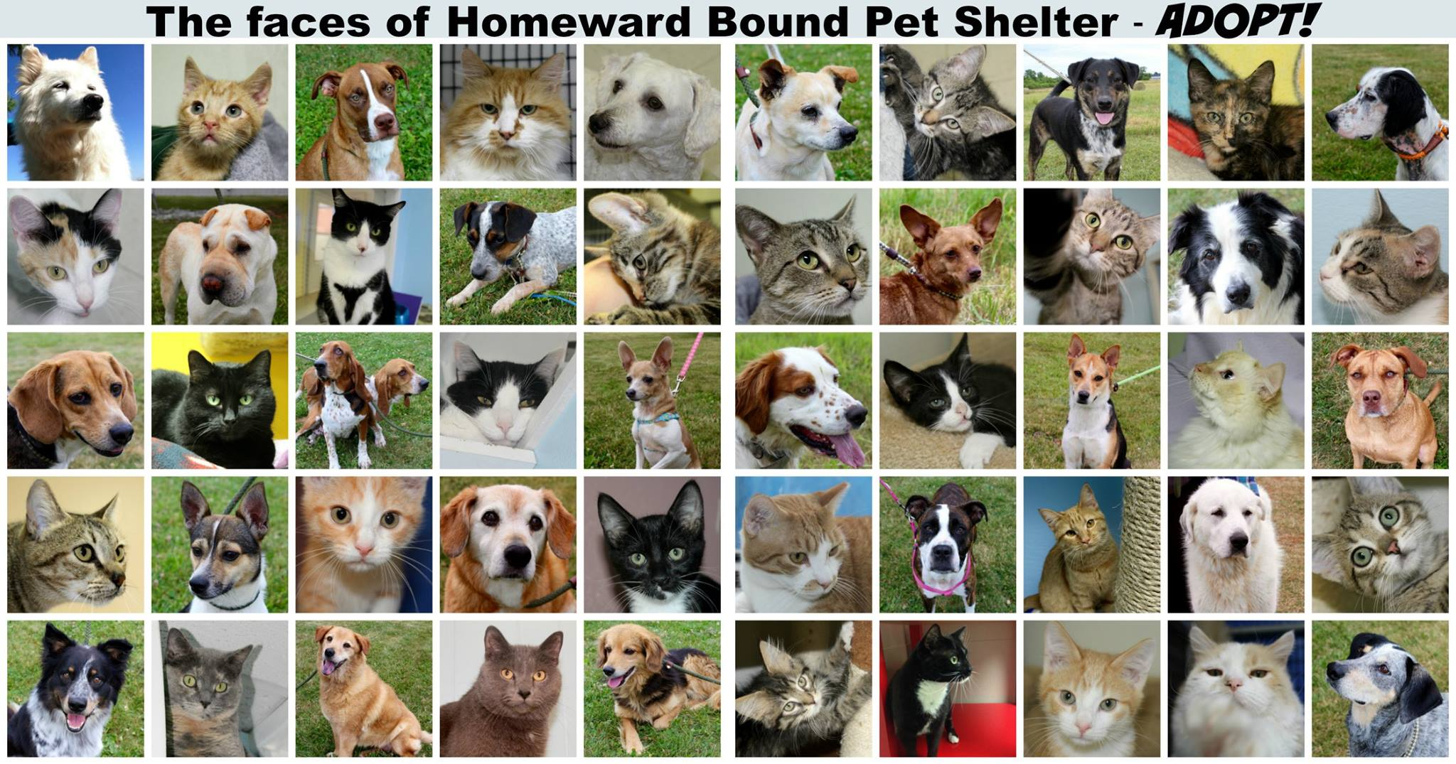 Adopt from Homeward Bound Pet Shelter in Decatur, IL. These pets & more are counting on us for forever homes before August 31, 2016.