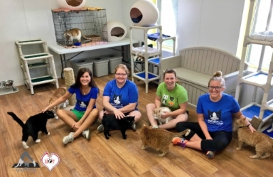Team Yoga4Cats with adoptable cats at the Humane Society of Decatur and Macon County.