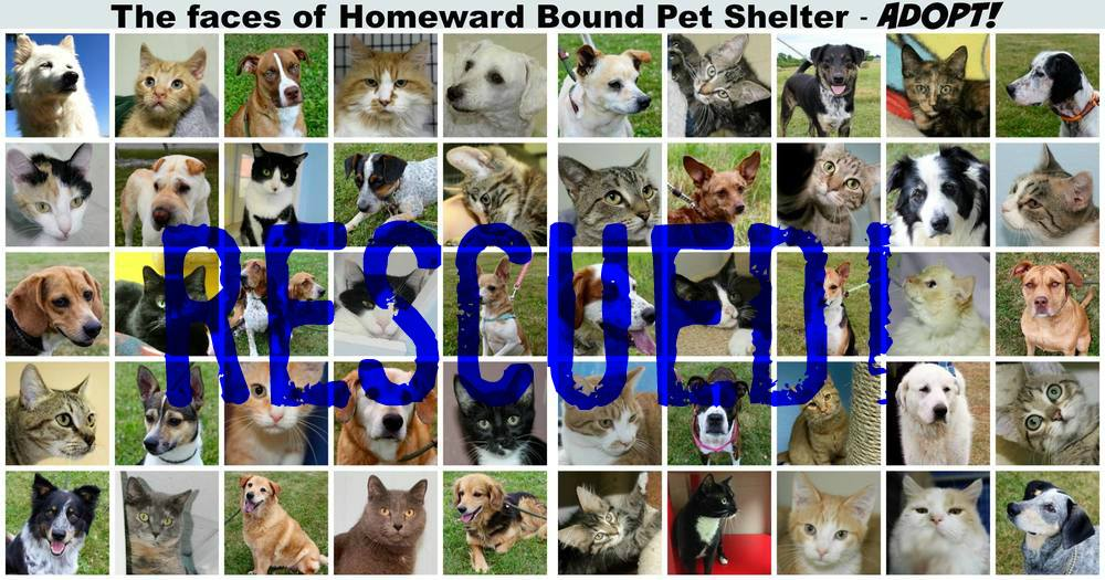 All of the pets from HBPS have been rescued!   82 pets rescued in 54 days!  #adoptHBPS   2 dogs transferred to other no-kill rescue organizations and adopted 80 cats & dogs since closure was announced on July 1!