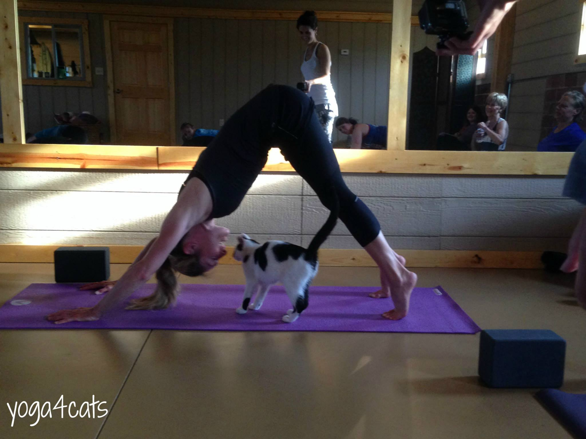 About Yoga4Cats