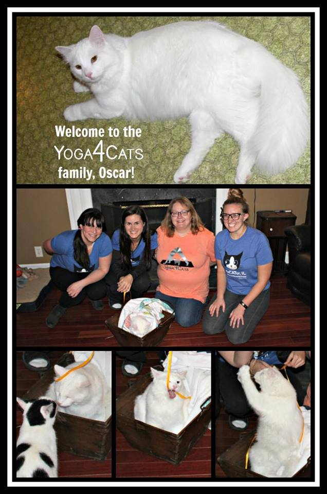 Oscar: Adopted by Team Yoga4Cats