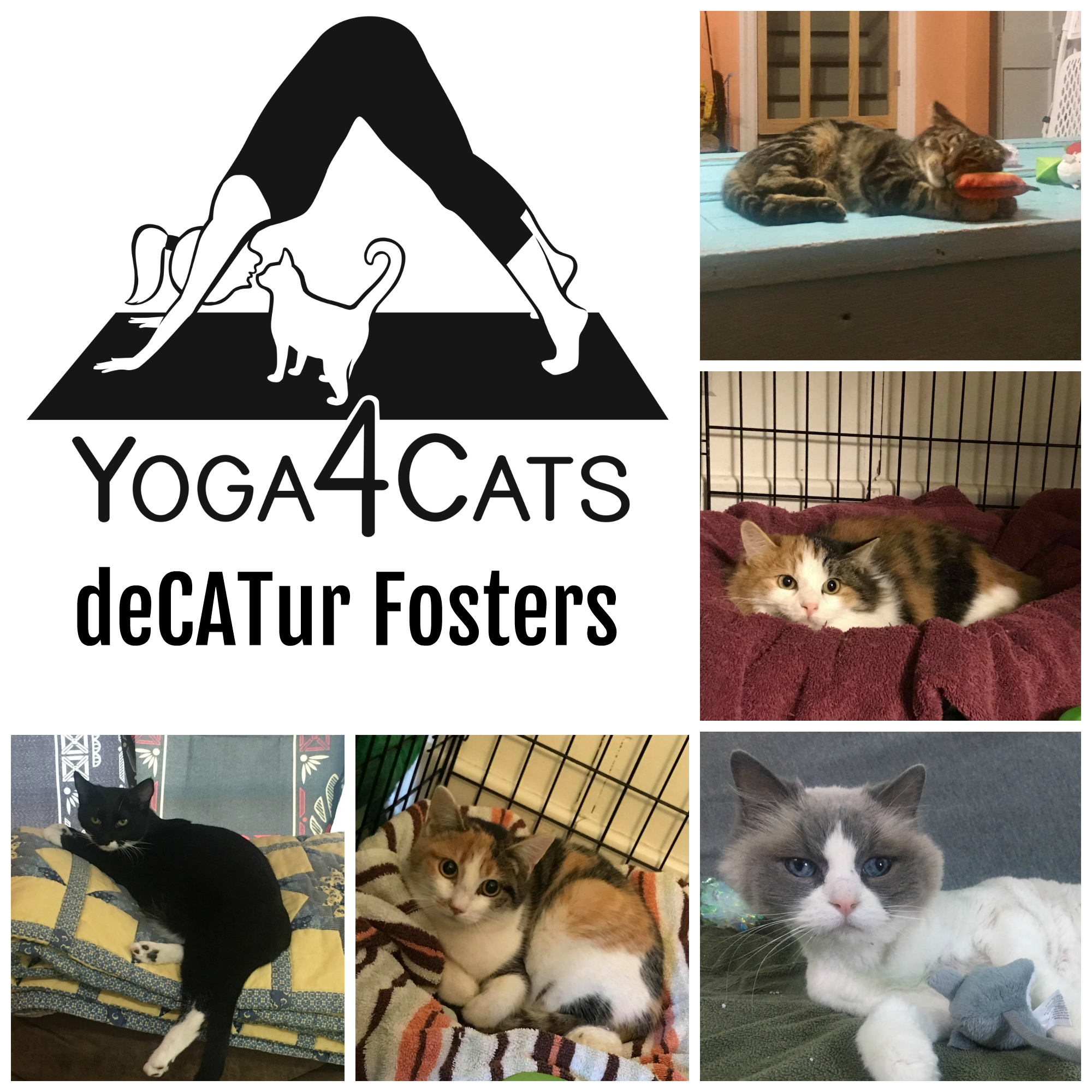 Adoptable deCATur Fosters