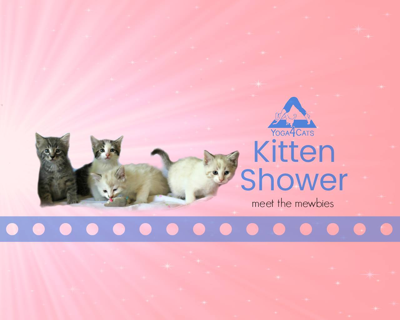Meet the #mewbies and other adoptable #deCATurFosters! Bring a suggested donation from our PetSmart wish list and play kitten-themed baby games. Stop by anytime during this fun event to get your kitten fix or apply to adopt!  Saturday, June 2nd 11:30am-2:30pm at PetSmart  1460 Koester Dr Forsyth, IL 62535