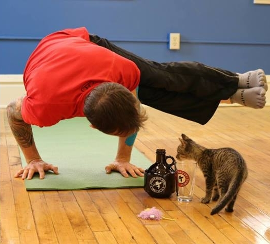 Yoga4Cats Events