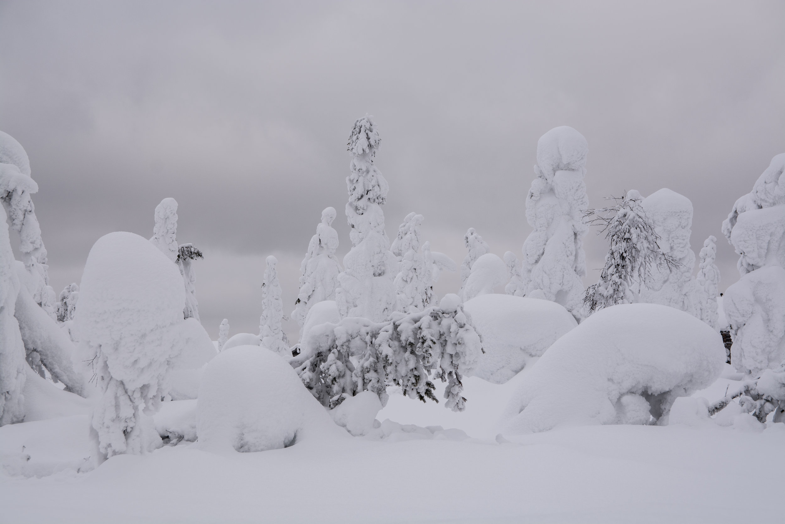 At this point you're probably tired of seeing more snow trees, but this is what northern Finland looks like. Snow, and trees.