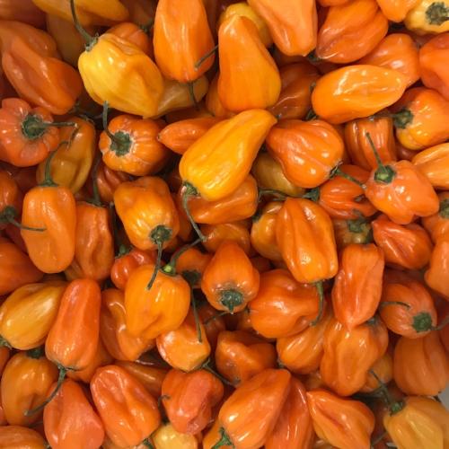 Orange Habaneros
