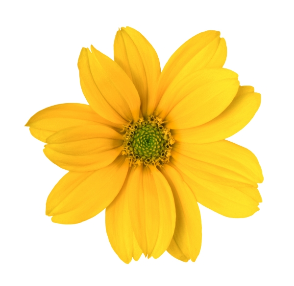 floweryellow.72.jpg