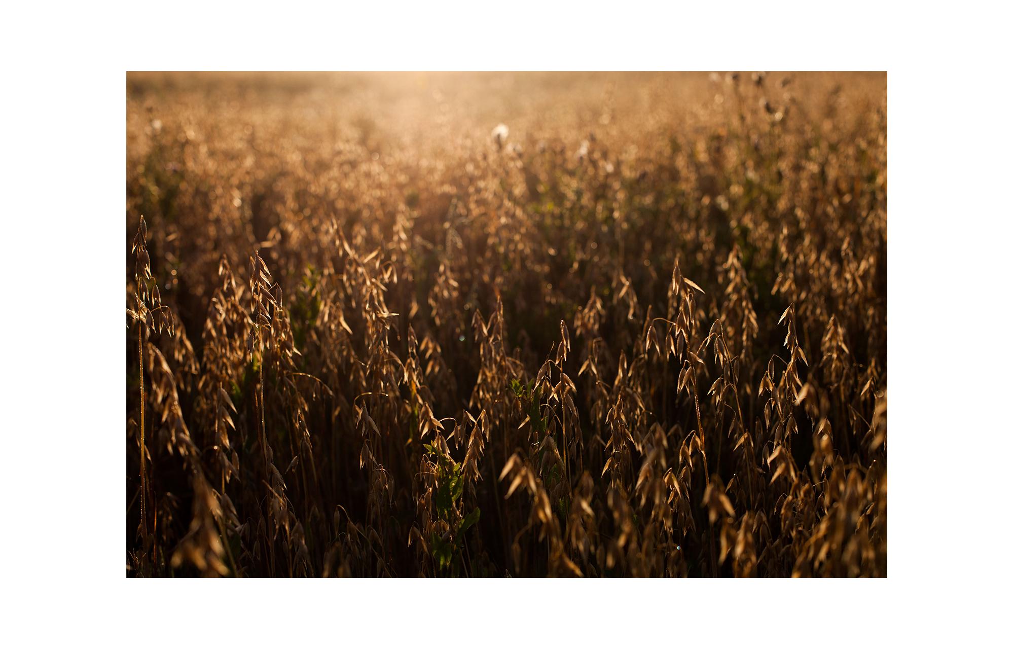 Mollebakkegaard_rc-022.jpg