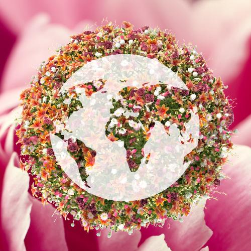 Flower Direct -  Flower UNLMTD