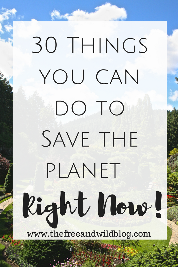 30 Things You Can Do To Save The Planet Right Now // The Free & Wild Blog