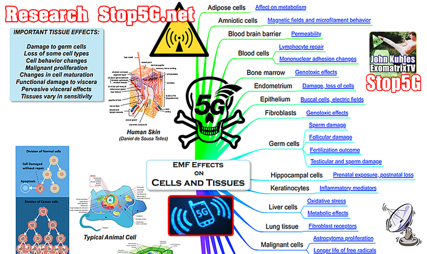 """…an image from stop5g.net which is an amazing resource - the aesthetics are something else."" -Stacy Wood"