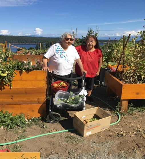 Snaw-naw-as Elders Debbie Bob (left) and Bonnie Jones (right) harvesting vegetables from the healing garden. Photo credit: Alison Drennan