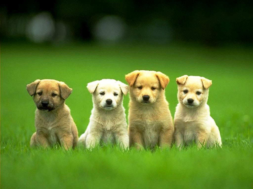 puppies-9.jpg