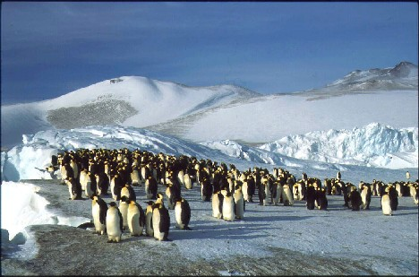 Ooh, wow look at them migrating.  You know why they're migrating?  Because SOMEONE fucked up their climate!