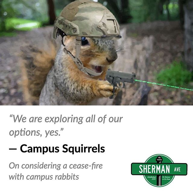 Campus rabbits did not respond to requests for comment.