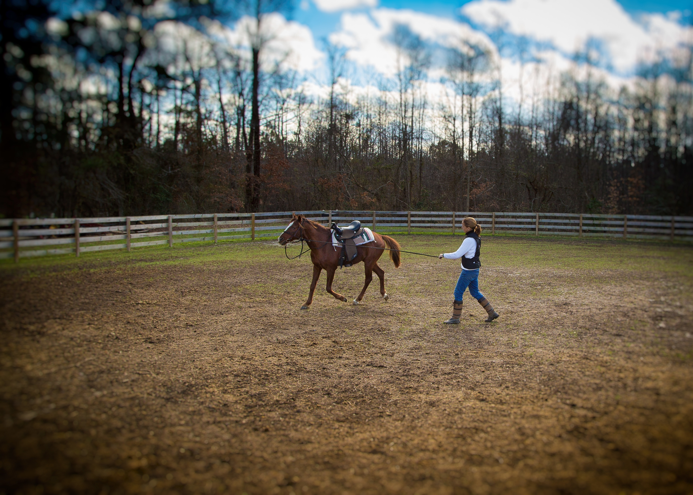 Effective groundwork is a critical part of equine relationship building.