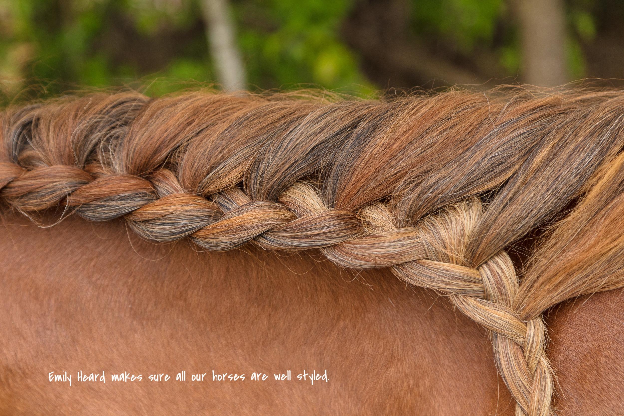 Windhorse Path 5-20-17 N-WM-1.jpg