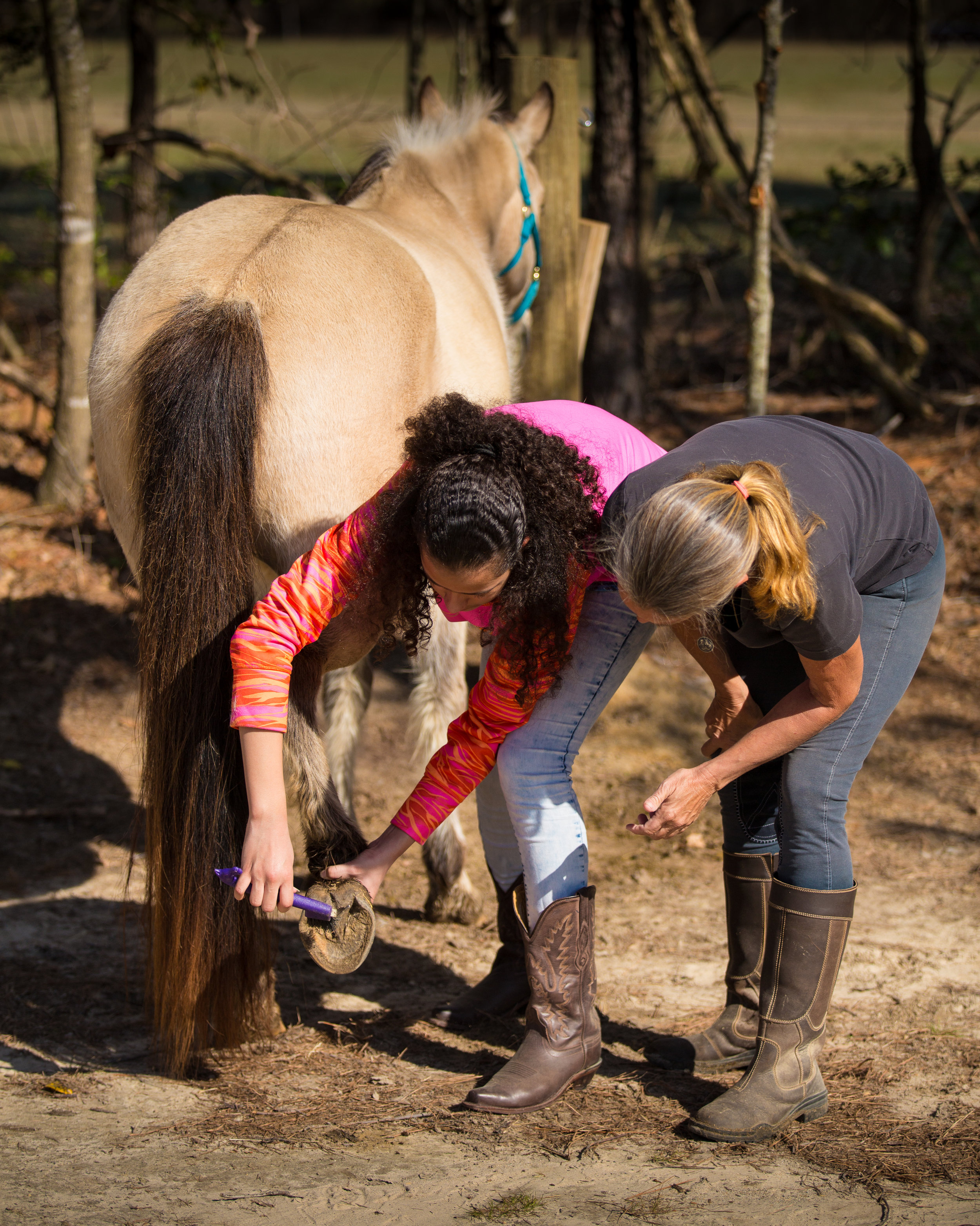 Learning about horses and hoof care is an important part of building that relationship with a horse.