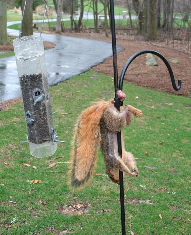 One extremely unlucky Squirrel !!!!