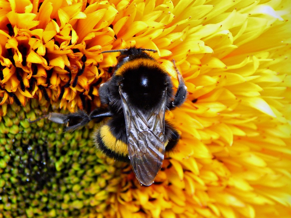 swansea bee pest control bumble bees