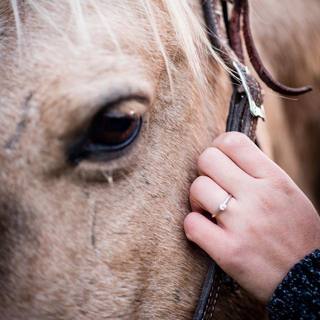 I love detail shots! #engaged #engagementring #engagementphotos #love #palomino #diamonds #leatheranddiamonds ##weddingphotography #horse #tellyourstory #naturallightphotography #ilovemyjob
