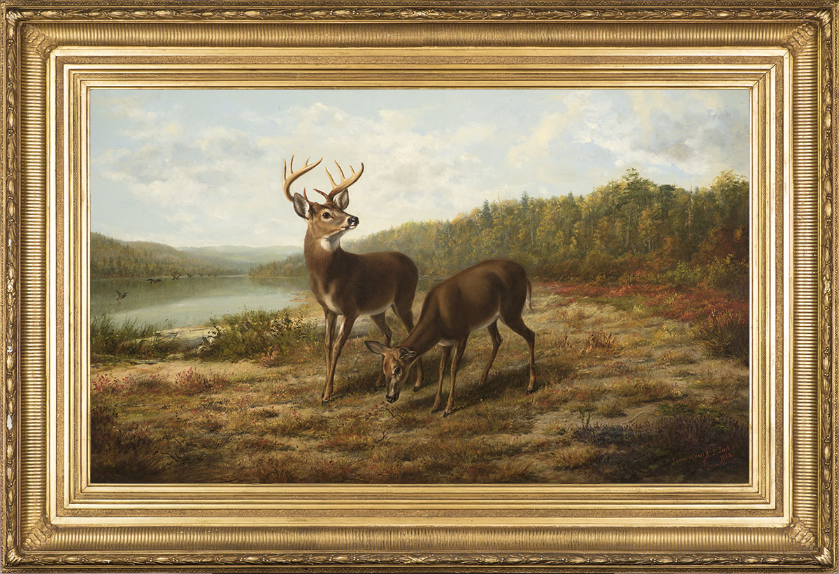 Buck and Doe: October,  1879-1883 Oil on canvas, 24 x 40 in., signed lower right: James Hart Signed, inscribed, and dated lower right: A. F. Tait / N.A . / 1883 / Adirondacks / 1879  Note:  This painting is a collaboration between Tait and James M. Hart (1828-1901). Price: $135,000  Inquire about this work    This painting was originally sold to Peter Brett on November 18, 1879, and was returned to Tait in 1883; he then reworked it in collaboration with noted landscape painter James M. Hart. Tait and Hart sometimes worked together on the same canvases because the skill of one complimented the other. Tait excelled at painting animals, yet the surrounding landscape was not his forté. Little is known of the friendship between Tait and Hart, but it is believed that they first met in the summer of 1857 when they were both painting at Loon Lake in the Adirondacks. Later, they both had studios in the same building in New York, at 600 Broadway. Tait and Hart are known to have collaborated on only a dozen paintings, making our large, impressive canvas a rare and unique example of American sporting painting.