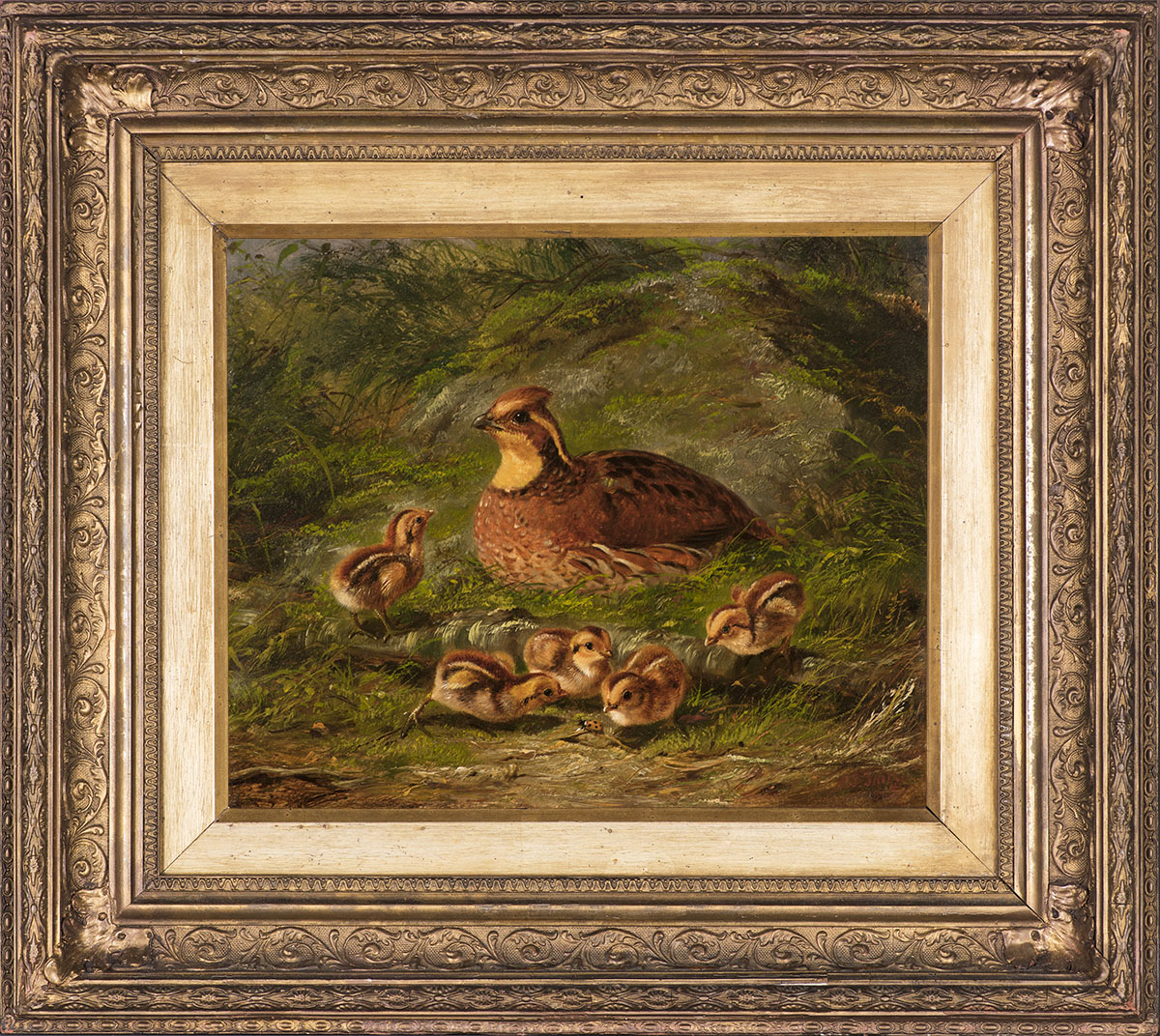 Quail and Young , 1865 Oil on board, 10 x 12 in., signed and dated lower right: A.F. Tait / 1865 Price: $28,000  Inquire about this work