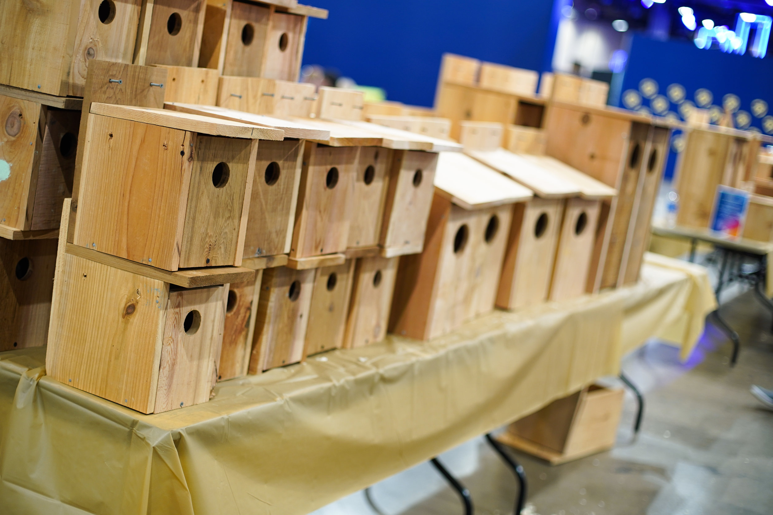 Animals-Finished-Nesting-Boxes-ATT-Dallas-18.jpg