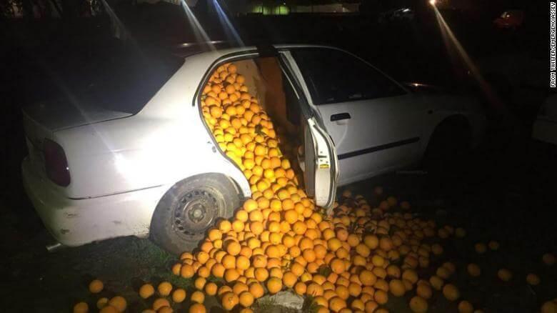 ventipop-oranges.jpg